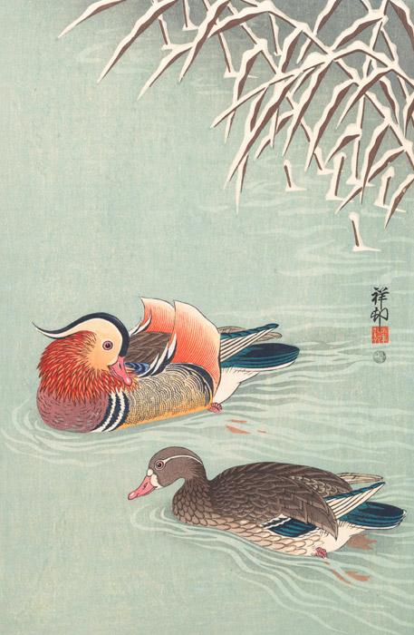 oshidori-birds